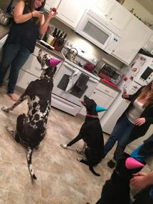Dori got invited to her first Dog Birthday Party